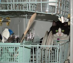 Recycled () Tags: cat james tuxedo mainecoon dishwasher dishcave