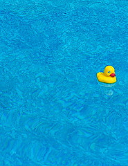 Hello Duck (mightyquinninwky) Tags: blue summer pool beautiful june yellow topv111 duck backyard 10 kentucky award fave explore 500 invite 1on1 westernkentucky unioncountyky morganfieldky momanddadshouse 2on2 lovephotography 1on1objects p1f1 5for2 123f1 bfv1 ci33 123ndpl top20blue exploreformyspacestation bestofformyspacestation