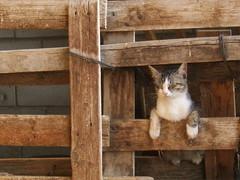 Comfortable Cat (sterestherster) Tags: wood sleeping pet animal comfortable cat spain kat farm kitty kittens zaragoza gato esther mascota tbg esthercita thebiggestgroup thecatwhoturnedonandoff