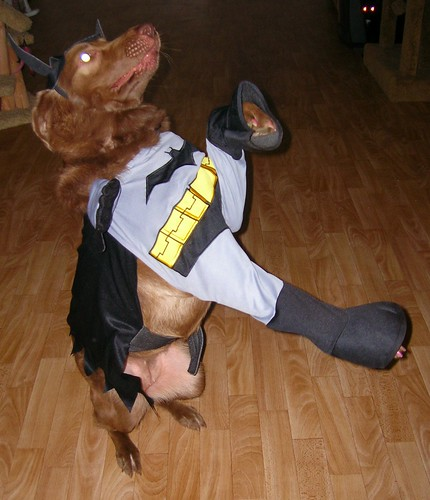 chocolate lab - halloween