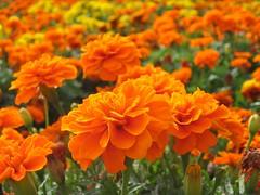 Flores - by Fábio Pinheiro