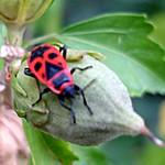 Bug, detail thumbnail