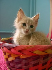 Not for sale (Marchnwe) Tags: cats kitten fluffy