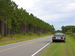 Stopped on My Road by Pine Forest (Old Shoe Woman) Tags: usa georgia southgeorgia dilosep05 pinetrees highway car dilosept05