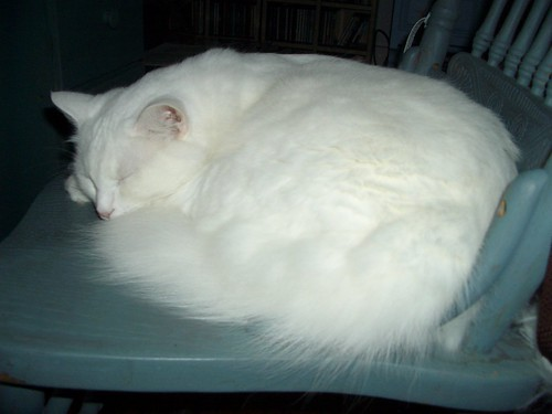 nilla sleeps