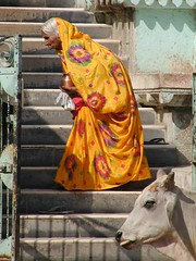 Woman and cow (earth2marsh) Tags: bundi asia india woman cow color temple 510fav fv10