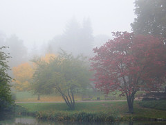 Fog in the Park (laurenz) Tags: park morning autumn light mist fall weather misty fog 1025fav 510fav germany landscape licht pond bravo europa europe wiesbaden nebel herbst top20hallfame top20landscape 525fav 4autumn wetter laurenz lbobke theinterestingest