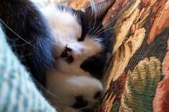 Spooky Sleeps (Gail S) Tags: cats macro cat nose kitten sleep kittens whiskers kodakdx7630zoom