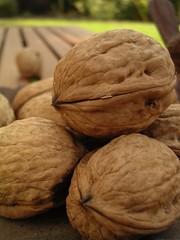 Walnuts (jillmotts) Tags: brown fruit walnut nut jillmotts