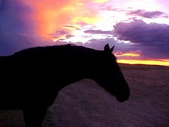 Black Horse and Wyoming Sunset on the Way Back to Texas (Pixel Packing Mama) Tags: sunset beautiful wow wonder lovely1 gorgeous great silhouettes artsy flickrcentralpool top20horsepix photographicart mayberryrfdruralplacesrurallives photographicimpressionism capture flickrwow blackhorse drivebyshooting loh theskysthelimit sunrisesunsetanythingsun 510favorites sunsetsandsunrisesaroundtheworld horsesset favorites5 horsesilhouette wyominghorse pixelpackingmama sunsetsset dorothydelinaporter worldsfavorite mavicafanclub i500 wowphotos beautifuluniverse wonderfulunlimited sunsetspool reallyunlimited v3000 bonzag favoritedpixset mostinterestingaccordingtoflickralgorithmset greatpixgallery10favespool wowaddonlypicturescommentedwithawowpool worldsfavortie wowiekazowiepool usaunitedstatesofamericapool interestingness22505may07 views3000pool views30004000pool sunsetdreams~endlesssunrisepool clairobscurdarknesslightpool ruralamericanwestpool sunshine~luckystarpool everythingamericapool commentedwithcoolunlimitedpool 1025favouritespool wonderfulwednesdaysoneperweekpool blackanimalspool cooltagcoolpool sunrisesunsetpool uploadedtoflickr2005set ruralamericapool chosenbyflickrexploreset commentedwithwowunlimitedpool wowphotospool beautifullightoneadaypool fantasticcommentedwithfantasticpool reallyunlimitedpleasevotepool favorites100pool pixelpackingmama~prayforkyronhorman favdone wordsfavoritepool over5millionaggregateviews worldsfavoritegroup