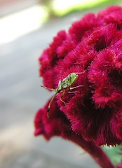 hungry (Alex Vinter (aka Wam Mosely)) Tags: macro flower insect pink xiamne buddhist temple tag1 tag2 tag3 taggedout top20nature