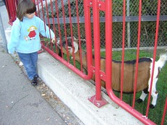 Feeding the goat (eloisavh) Tags: street people freeassociation children kid child criana hummingbirdxmas bichobom zfddomino