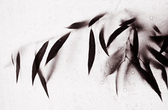 Leaves (Kelly Cheng) Tags: bw leaves cafe flora cafegallery getty tccomp029 favview lpflora