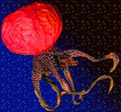 Octapus (Spy to die 4) Tags: octapus red dark underwater sea mystic deap hip monster trippy