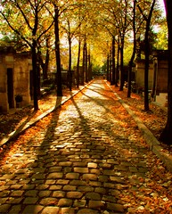 straight and narrow ([phil h]) Tags: 2005 street autumn light shadow paris france fall topf25 beautiful cemetery leaves topv111 1025fav wow interestingness topf50 topv555 topv333 october topf75 warm pretty glow shadows 500plus topv1111 topc50 topc75 topv999 topv444 picasa fv5 topv222 cobblestone 500plus20 fv10 topv777 straight parisist topf100 topv666 narrow prelachaise topv888 lv 75020 visit75020 visitperelachaise youcanaddthistothehalloffameofthe1025favpoolifyouwant philter intheshadowutata 1000v40f