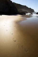 Golden (jauderho) Tags: sanfrancisco california usa 20d topv111 1025fav wow topv555 topv333 flickr 500v20f 100v10f jauderho sfchronicle96hours