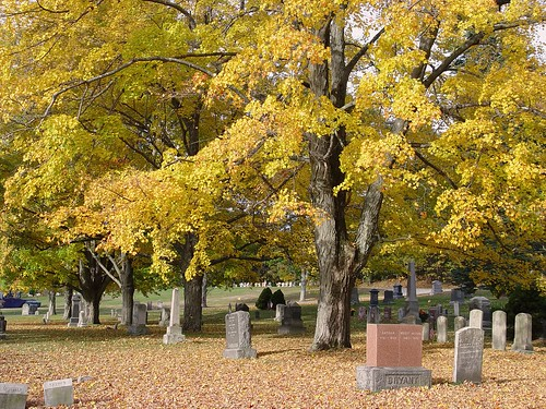 cemetary trees, view 2