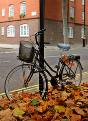 Bike Leaves Lamp Post (Davoud D.) Tags: deleteme5 autumn deleteme8 deleteme deleteme2 deleteme3 deleteme4 deleteme6 london deleteme9 fall deleteme7 leaves bike bicycle saveme saveme2 saveme3 deleteme10 lamppost cycle pimlico tatebritain cyclelondon