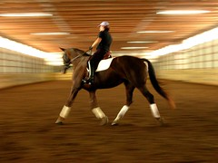 Dressage Training (Mr. Physics) Tags: show horses horse training arena equestrian dressage msoller