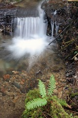 waterfall (Vida Morkunas (seawallrunner)) Tags: park autumn trees forest northvancouver seymour oldgrowth cwall seymourdemonstrationforest northshorefun