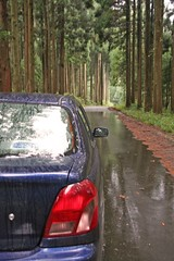Driving through deep forest in Rokuroshi, Katsuyama city (toshihiko2001) Tags: 2005  okuetsu ono katsuyama driving car fall japan autumn   drive