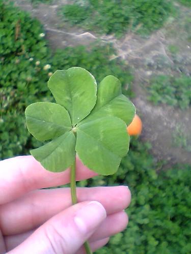Trébol de 5 hojas