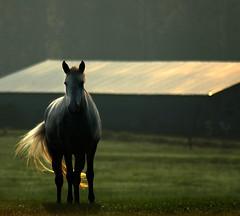 Evening Light (nailbender) Tags: light horse green grass ilovenature evening farm topv1111 thebest2005 top20horsepix stable blountcountyalabama nailbender faveme magicdonkey removeme fivestarsgallery faveme2 faveme3 removeme2 flickrplatinum jdmckinnon