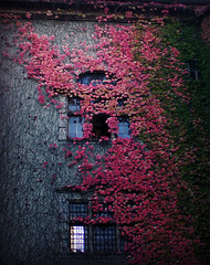 bunar / the well (maxivida) Tags: autumn castle window seasons ivy badenbaden creeper maxivida neuesschloss