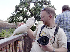 "craigs new bird • <a style=""font-size:0.8em;"" href=""http://www.flickr.com/photos/87605699@N00/57502229/"" target=""_blank"">View on Flickr</a>"