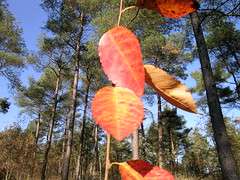 Ready 4 Winter (Meteorry) Tags: nederland netherlands paysbas holland fryslån friesland nature tree autumn automne herfst yellow brown leaves ooststellingwerf appelscha