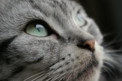 Green eyes - by *yasuhiro