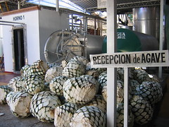 Agave reception