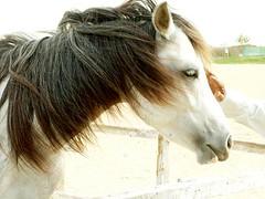 Horse (AL Nuaimi) Tags: al nuaimi uae dubai dxb shisha frend mobile digital horse