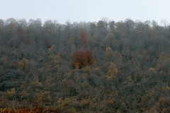 84-10042 (Iman Mirabzadeh) Tags: fall kandelous iran canon20d sigma28300 mazandaran mountain tree forest