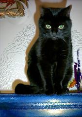 just a joke (di notte note) Tags: cat cats photoshop experiment colors joke fun 2005 november