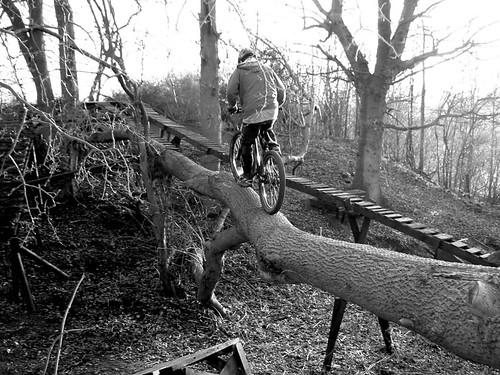Treeride @ Hertshore