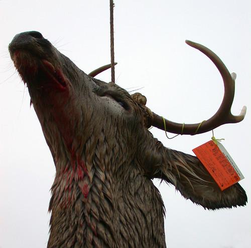 Buck Pole III