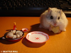 LiLi & Gyoza *LiLi* (Seattle Roll) Tags: pet pets animal animals hamster rement campbell gyoza potsticker