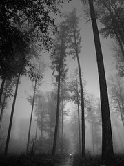 Vlos, arbres et brume (p-h-d) Tags: trees blackandwhite bw topf25 forest blackwhite topv333 cafegallery noiretblanc arbres phd fort