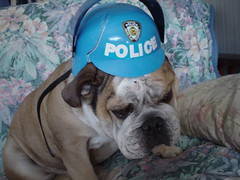 Riot Gear (Colorado Bulldogs) Tags: bulldogs