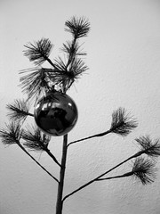 christmas time is here (evilcabeza) Tags: tree ornament christmas christmastree happyholidays peanuts charliebrown pathetic cute little blackandwhite bw