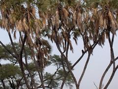 HPIM1021 (http://jvverde.birdsby.me/v2/) Tags: africa travel kenya frias safari viajes viagem lixo viagens vacations hollidays qunia lixo2