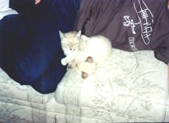 0049--both kittens (JohnHedtke) Tags: kitten pix yin yang