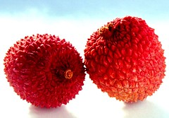 Lychees (Reciprocity) Tags: two sunlight macro film fruit backlight 35mm wow interestingness interesting glow superia gutentag lovely1 55mm 400asa lychees nikkormat printscan micronikkor reciprocity