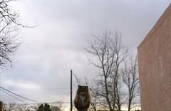 looming cat