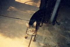Jinx (Dani H.) Tags: cats jinx