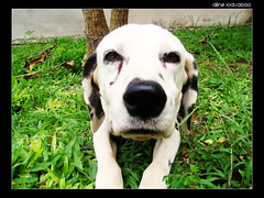 Prenda minha. (alineioavasso™) Tags: dog explore challengeyouwinner