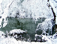 Brrrrr Thats cold (Lisa4414) Tags: white snow ice nature water tag3 taggedout ilovenature pond tag2 tag1 lisa maryland 2006 lookatme thebiggestgroup