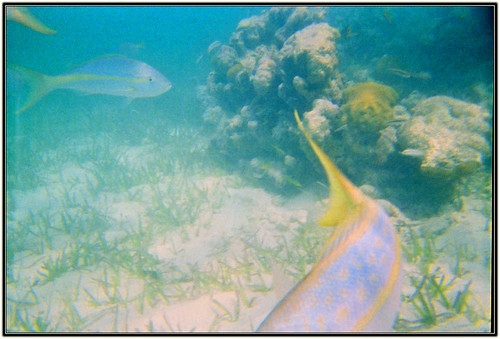 Cheap underwater camera picture