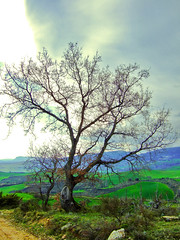 Tree. (visablanda) Tags: sunset espaa tree arbol atardecer spain camino path border soe navarra nafarroa borde